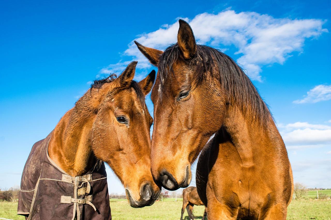 horses-1078676_1280
